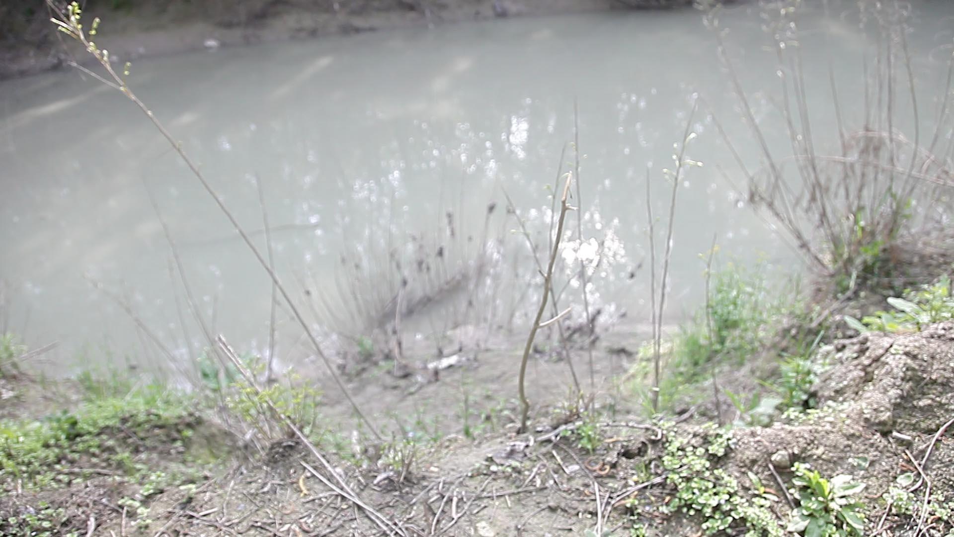 torrente Parma sfuocato.jpg