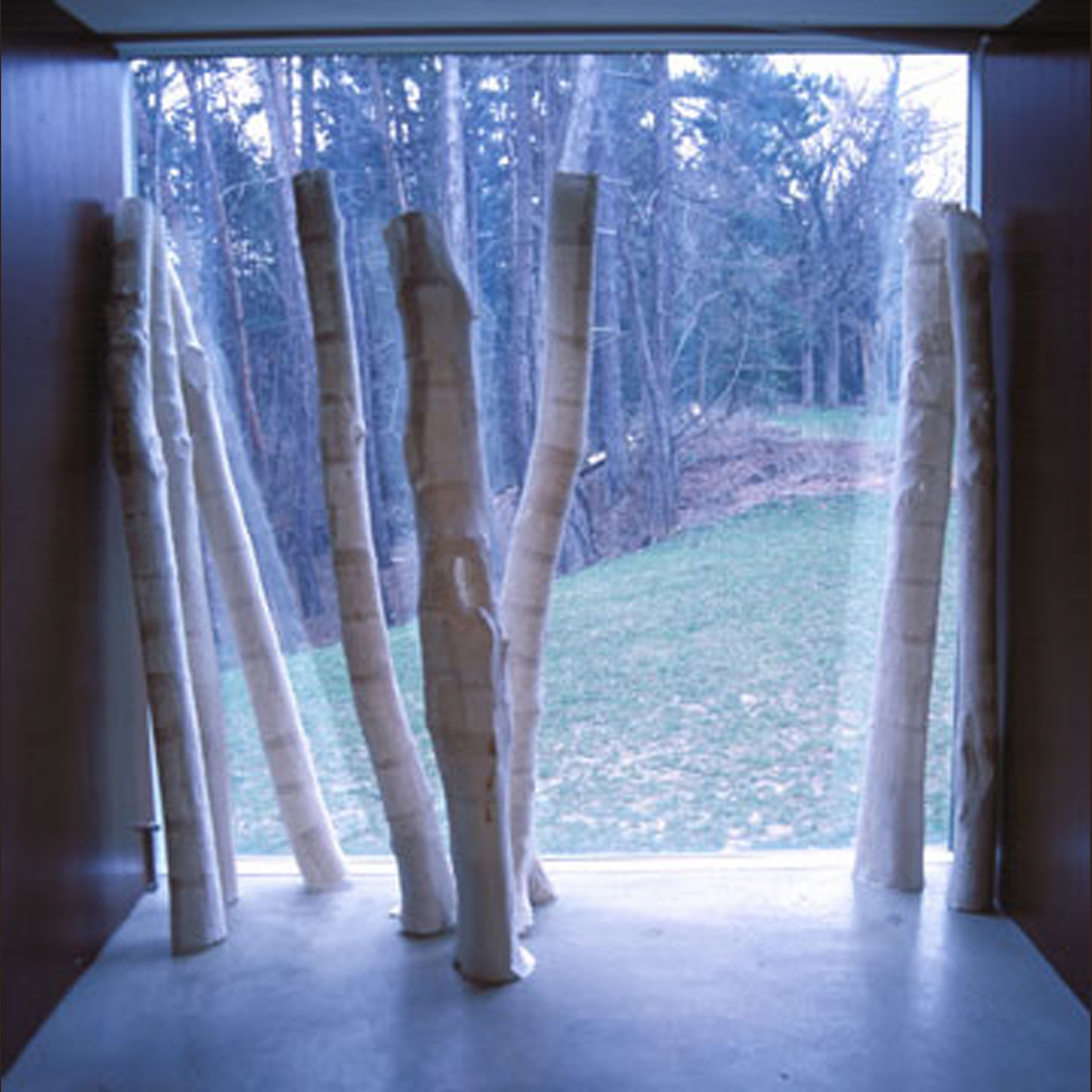 Remembering Trees. 2004. Handmade paper, waxed linen. -