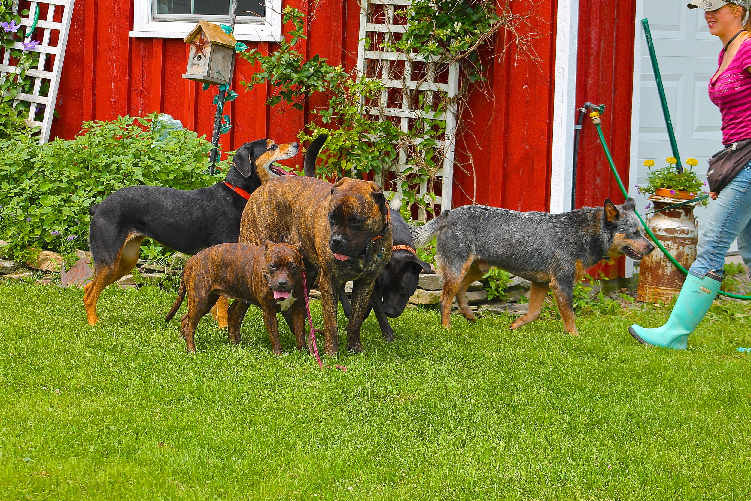 Jake and friends in front of barn.JPG
