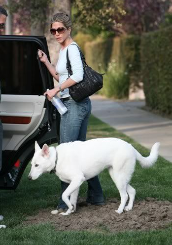 jennifer-aniston-walking-dog.png