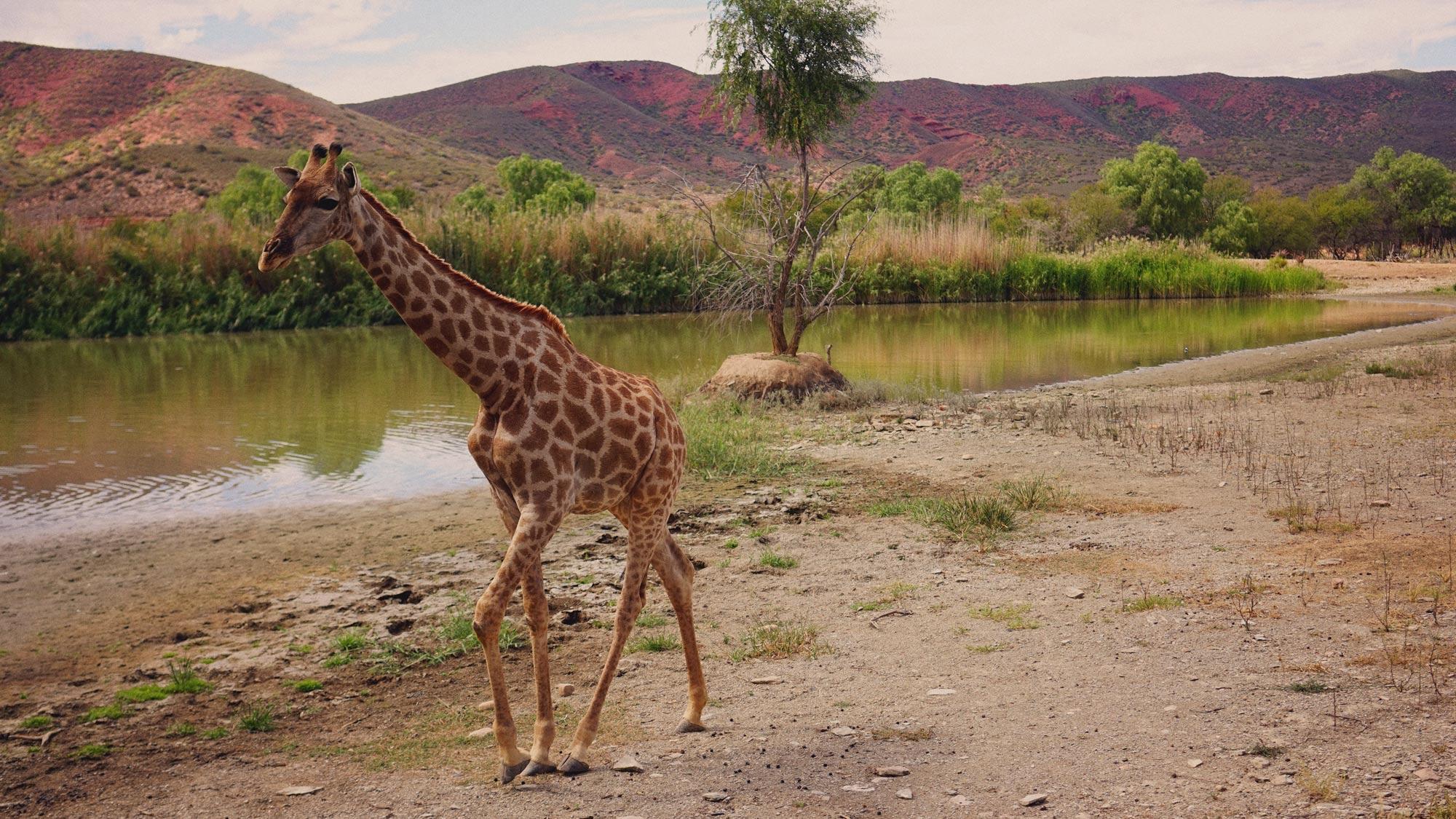 02_Giepert_South_Africa.jpg