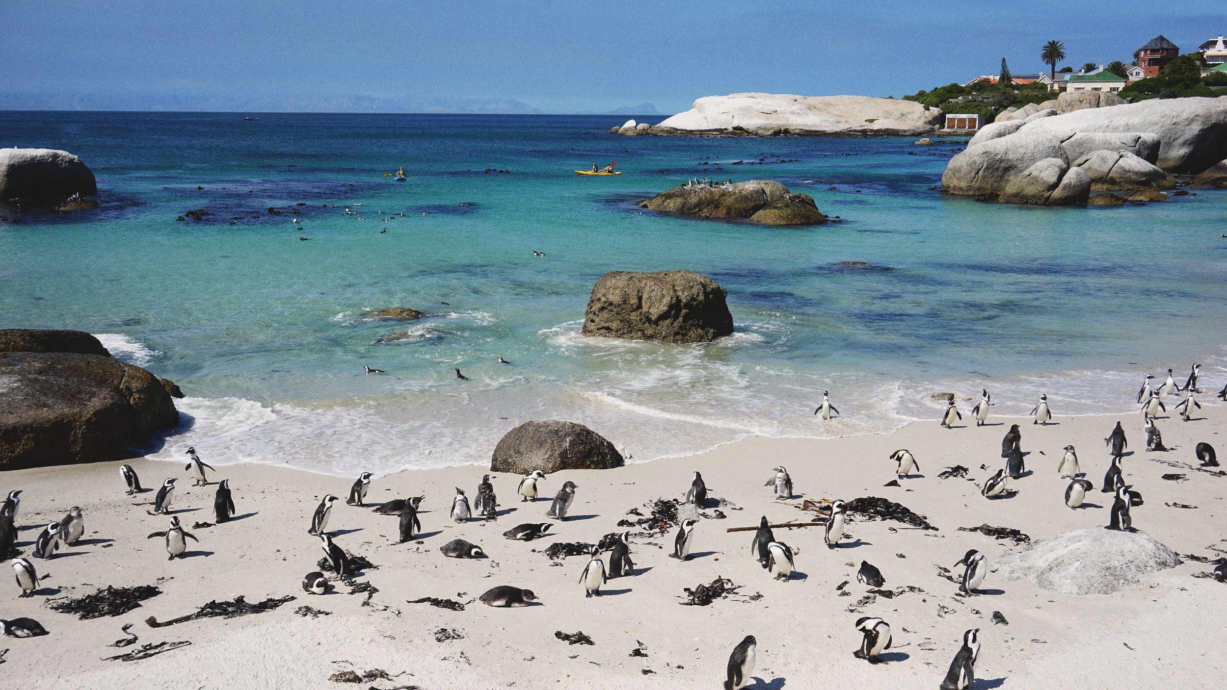 41_Giepert_South_Africa.jpg