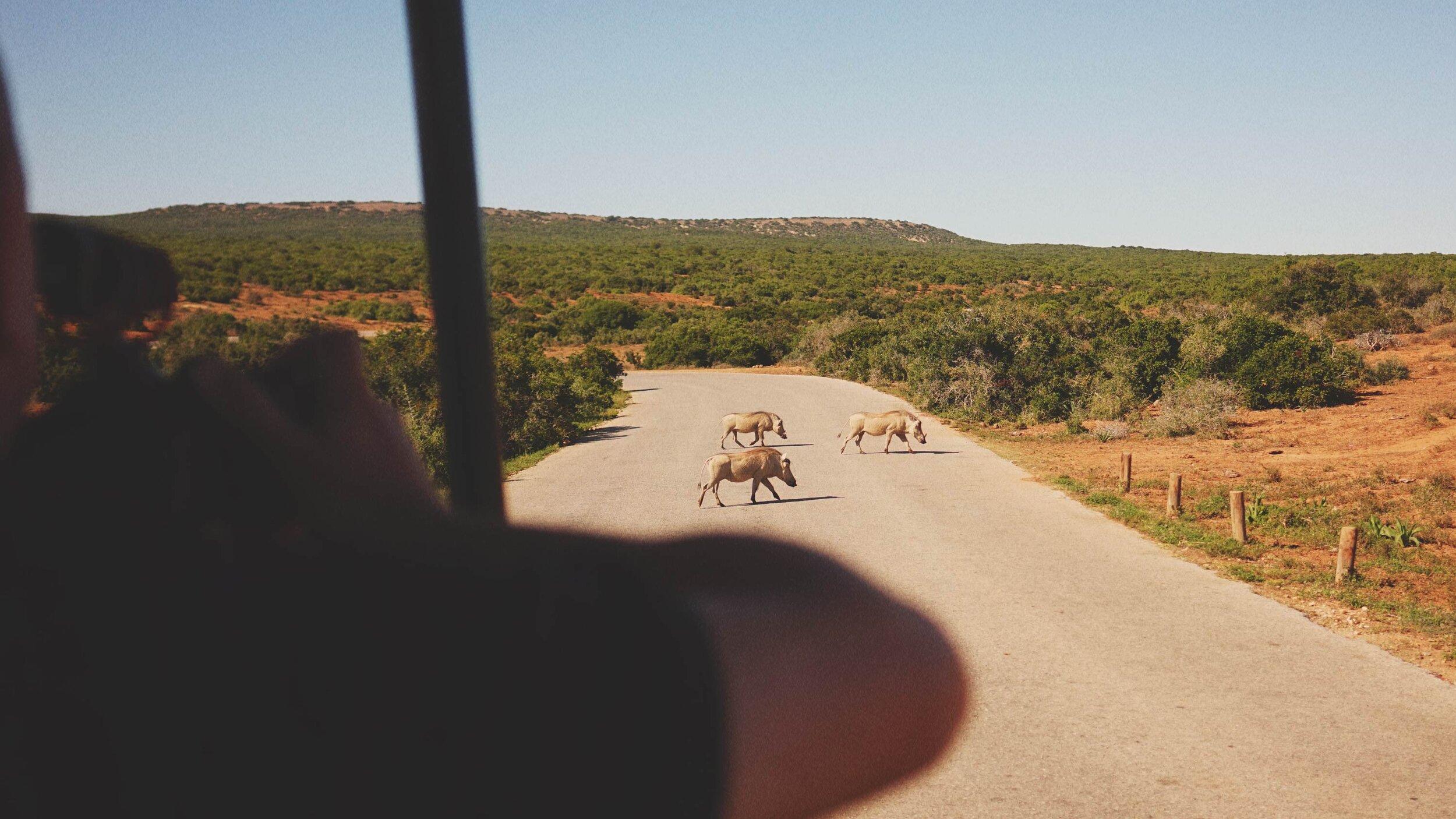 81_Giepert_South_Africa.jpg