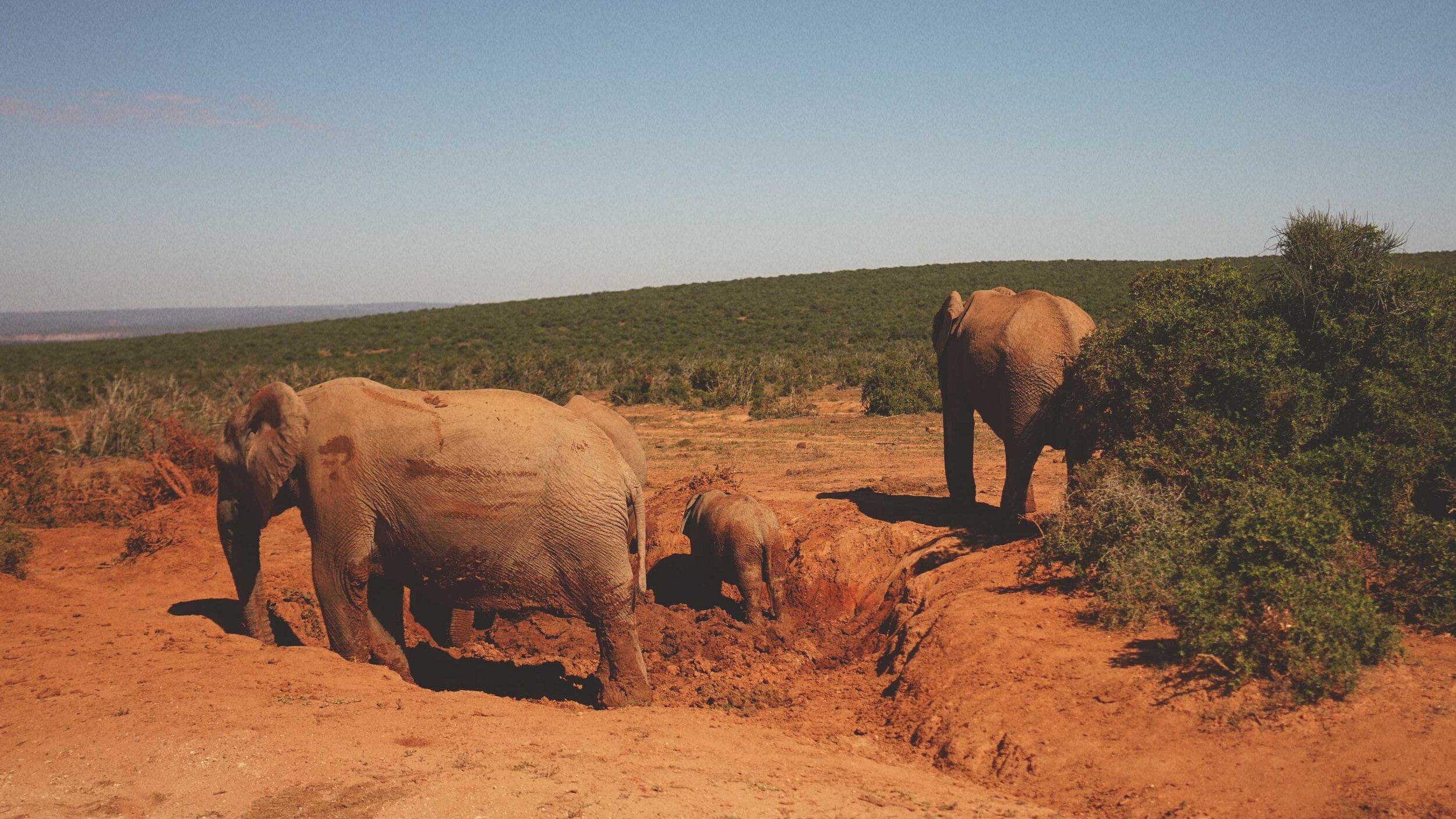 82_Giepert_South_Africa.jpg