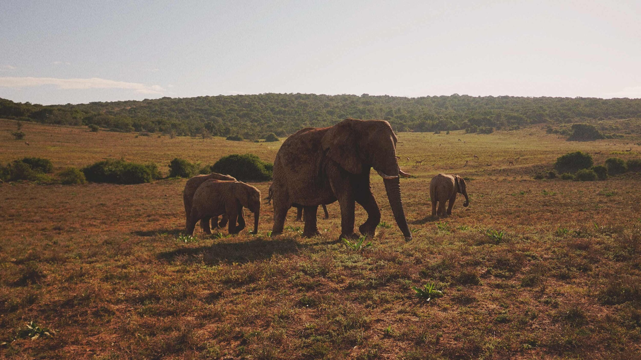 83_Giepert_South_Africa.jpg