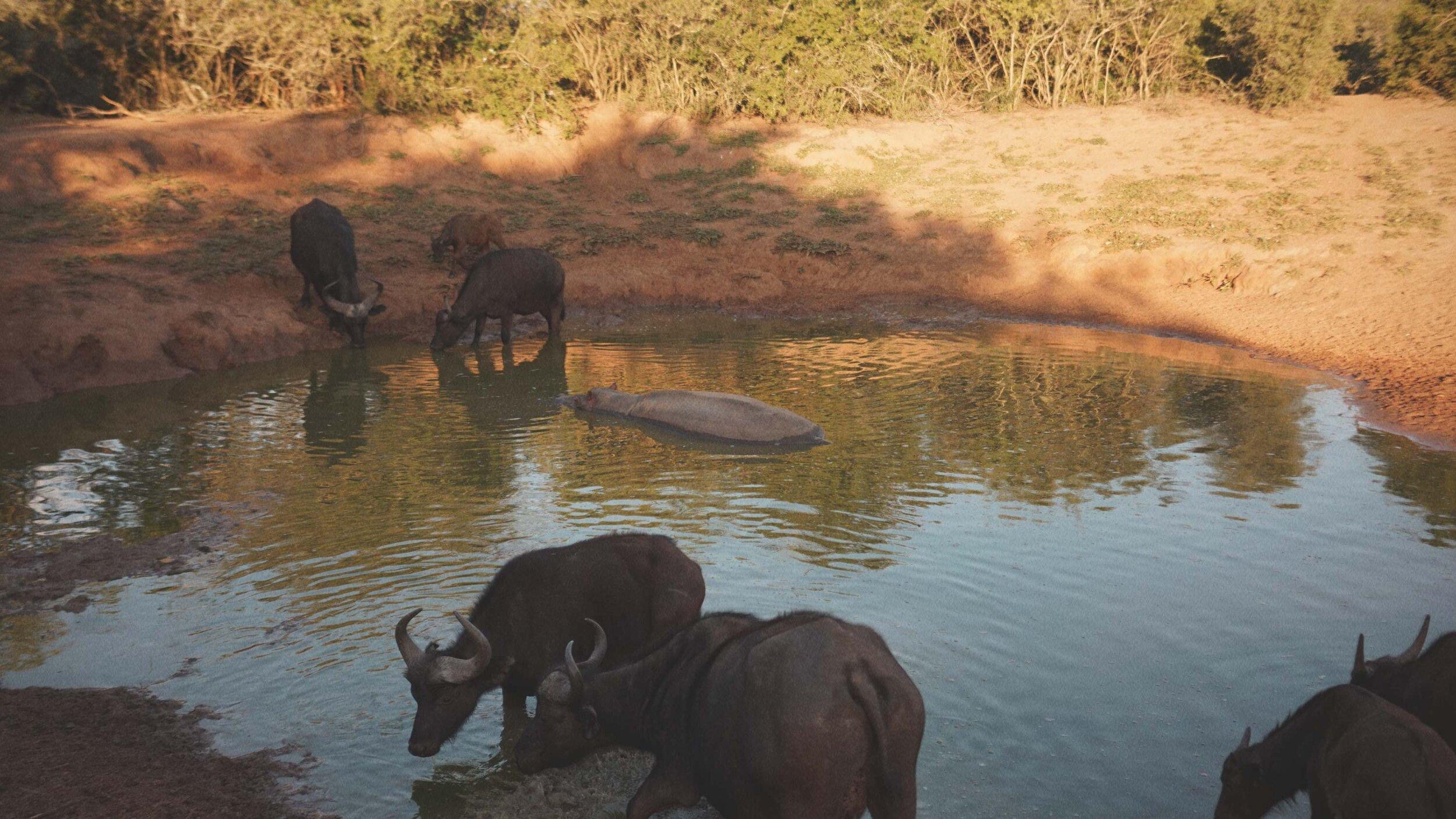 84_Giepert_South_Africa.jpg