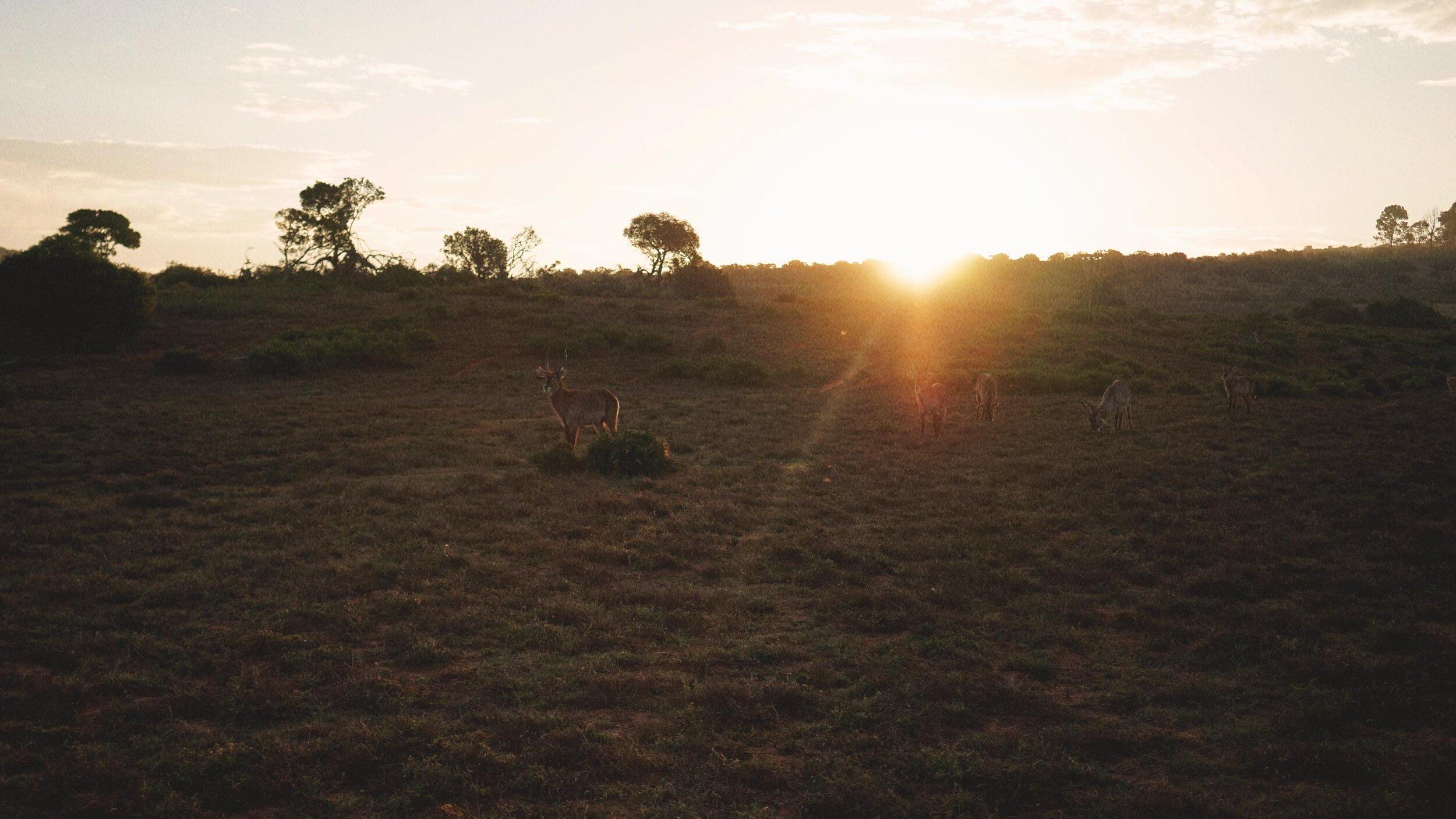 86_Giepert_South_Africa.jpg