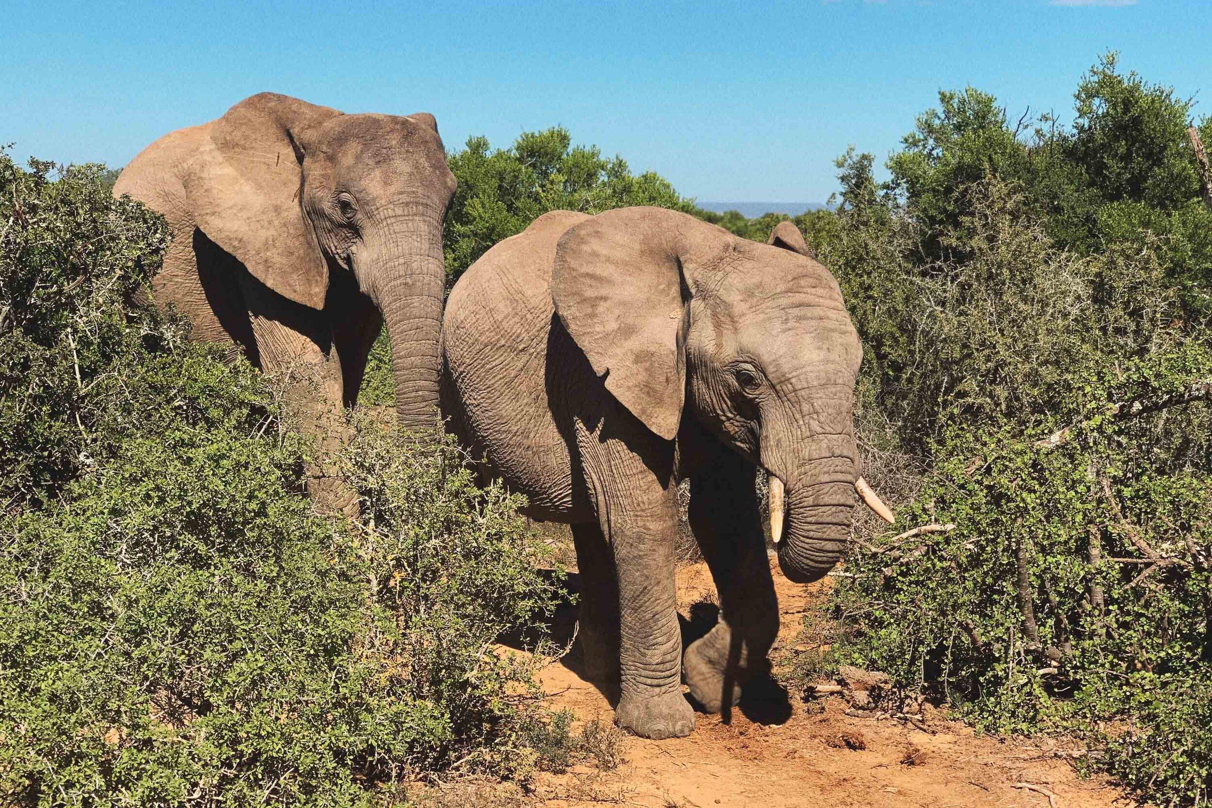 103_Giepert_South_Africa.jpg