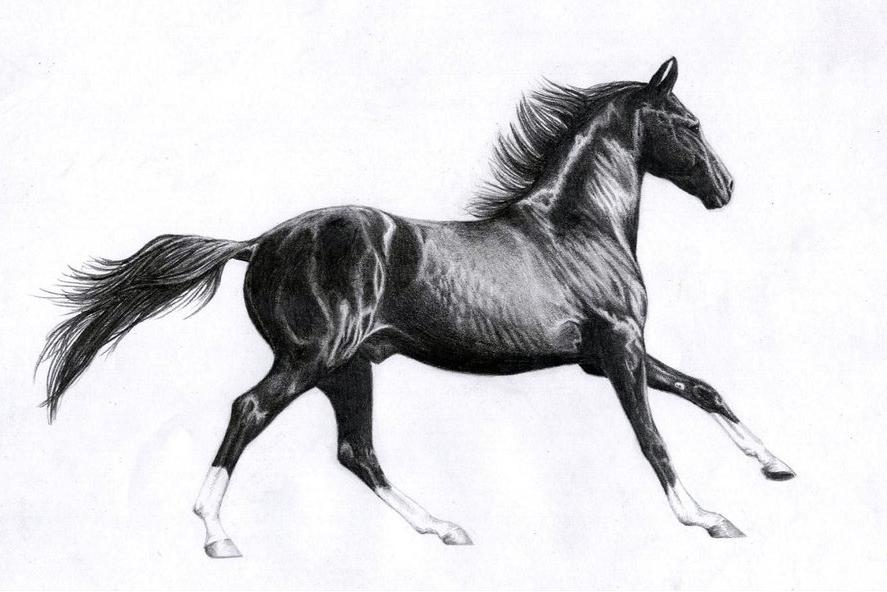 black_marwari_horse_by_tweakster-dmn8oz.jpg