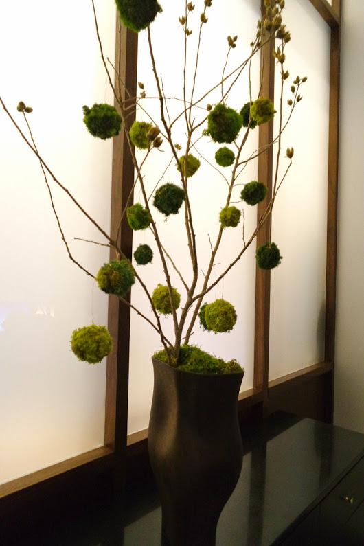 martha washington moss tree.JPG