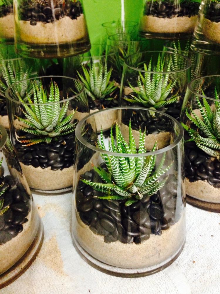 Aloe+succulent.jpg