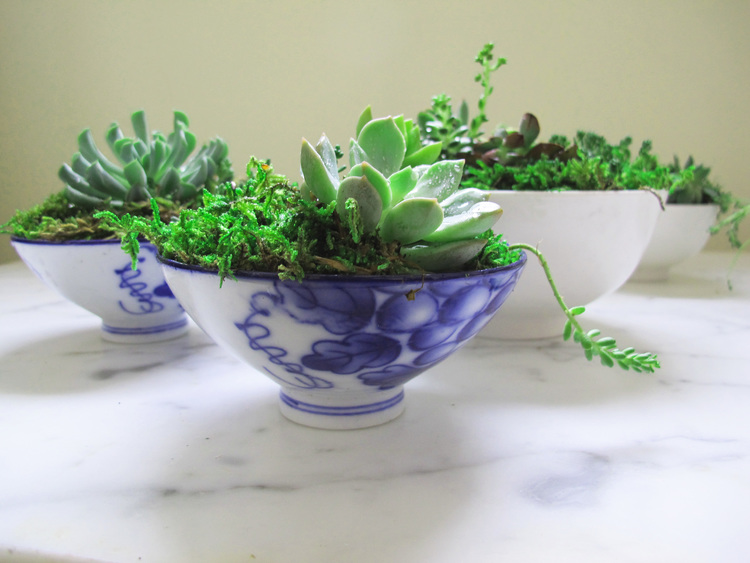 succulents+in+chinese+bowls.jpg