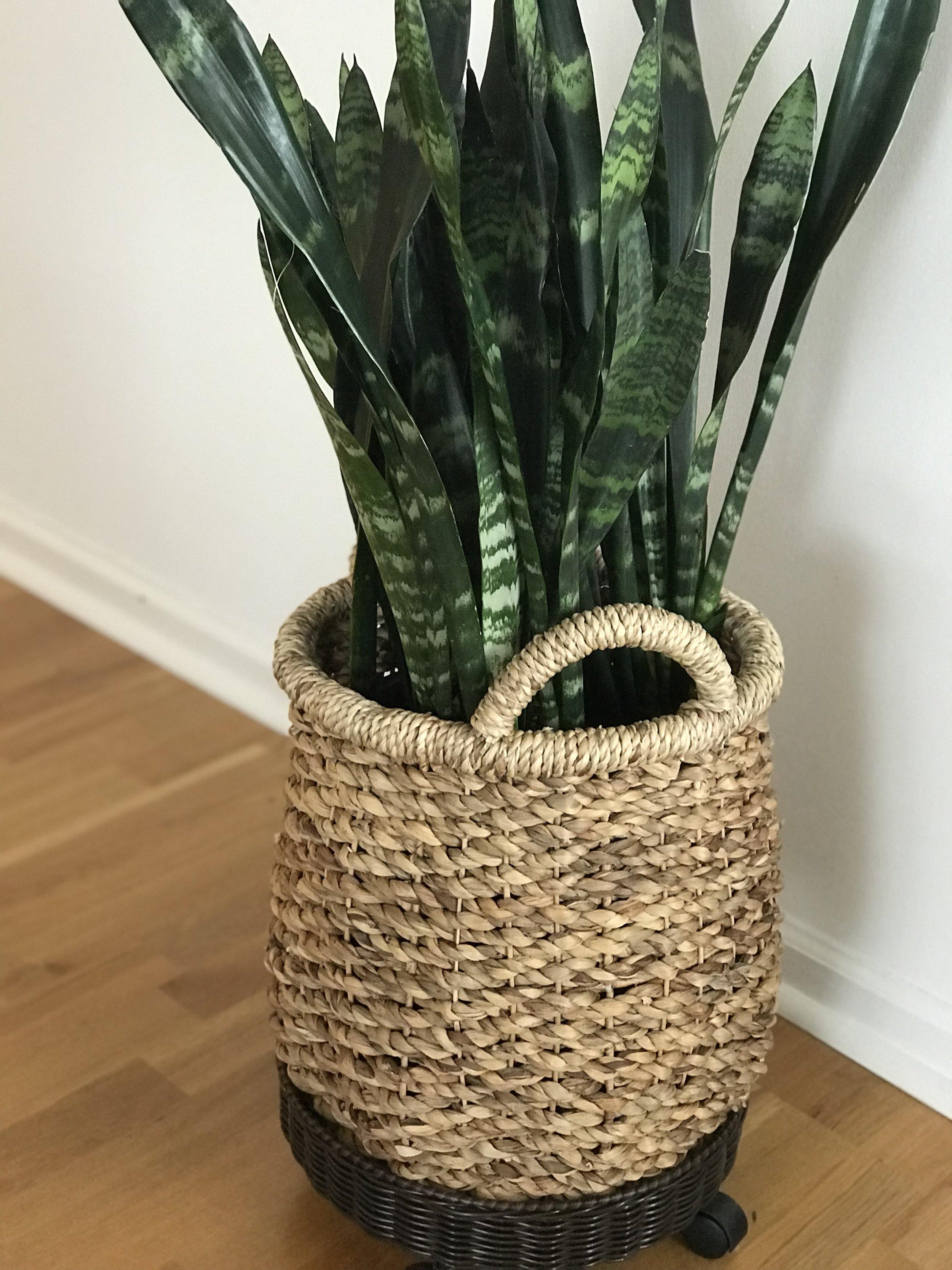 Annie-Plant-4.JPG