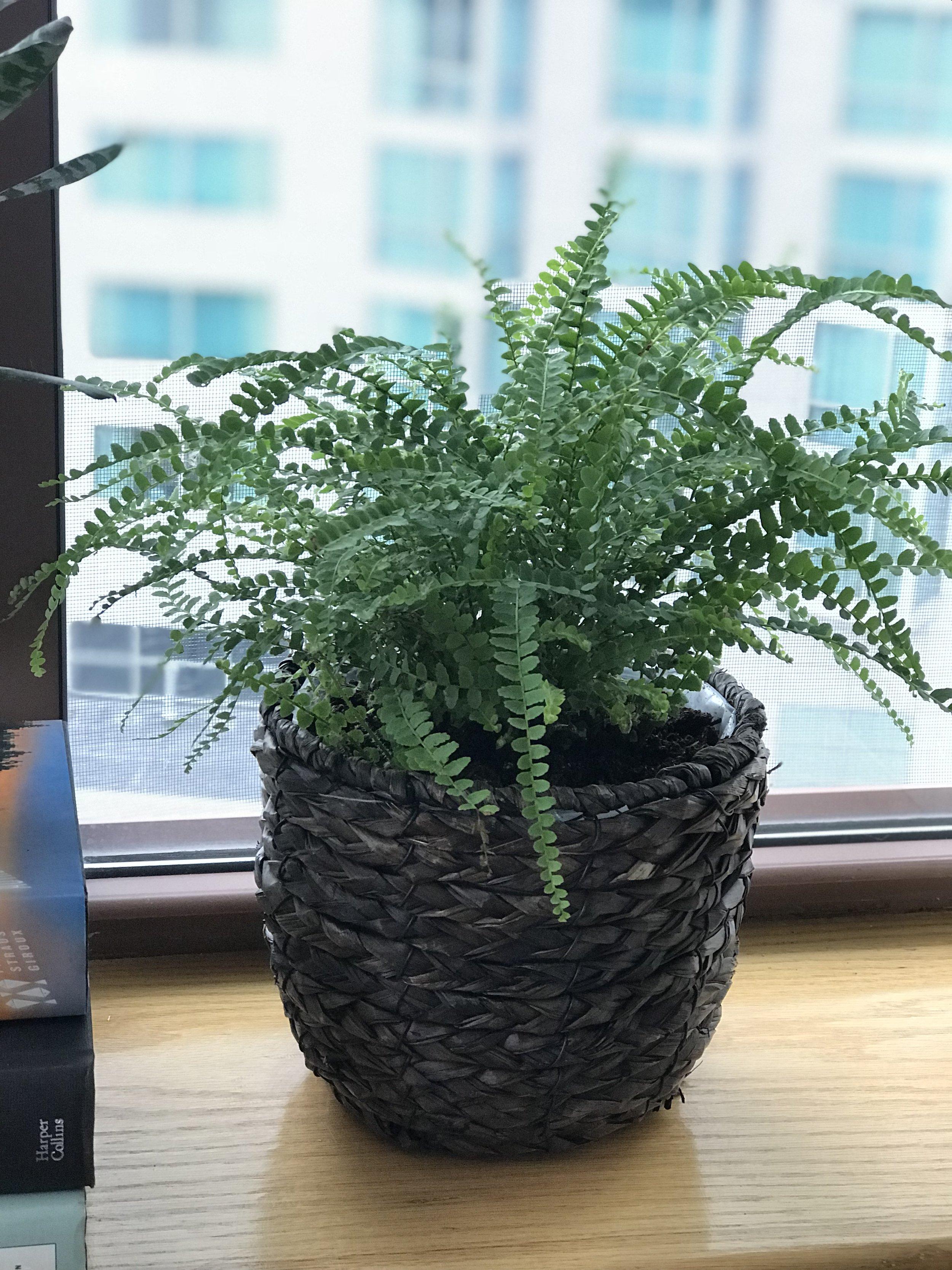 Annie-Plant-6.JPG