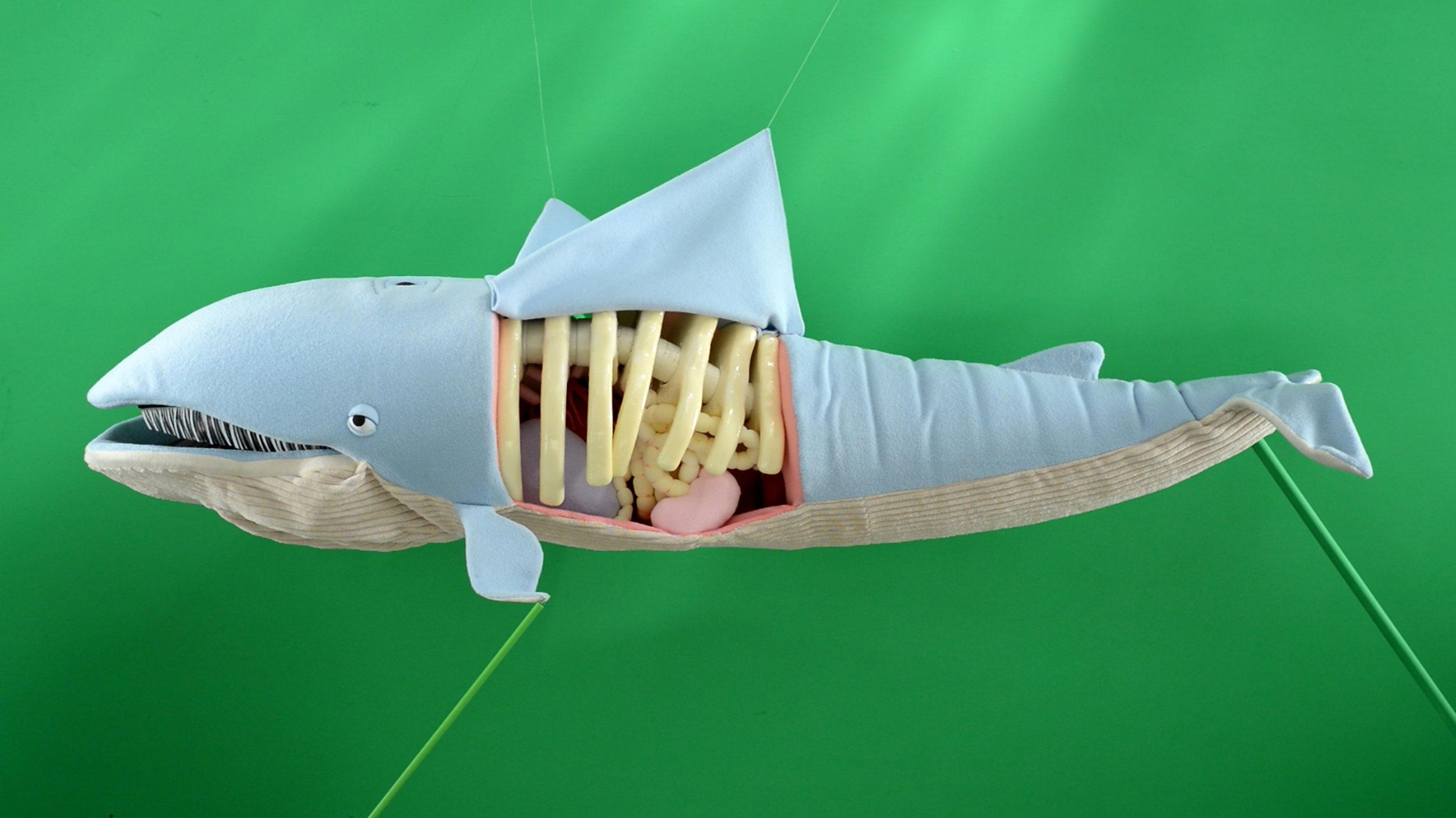 TED-asha-devos-blue-whales-cognitive-8.jpg