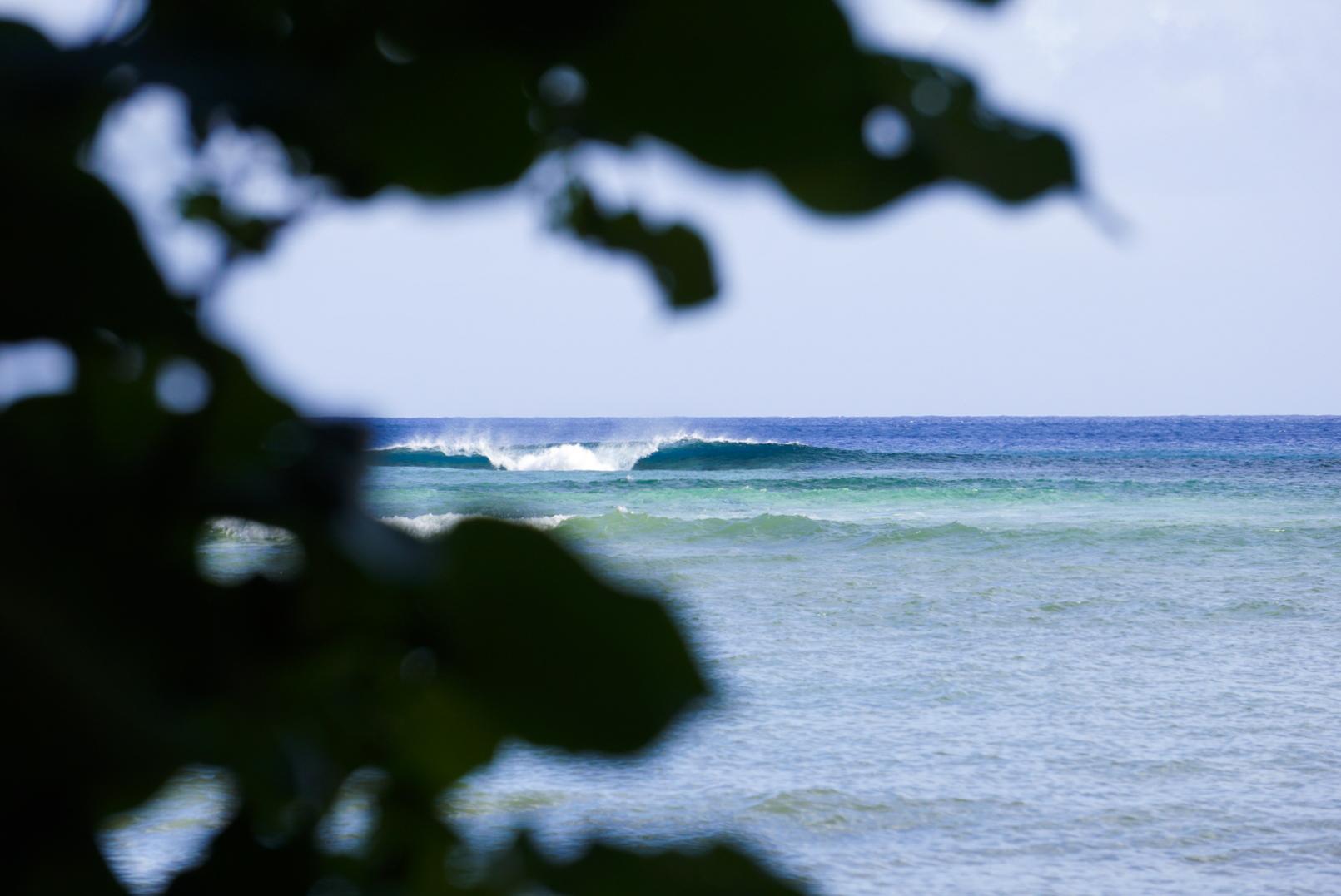 Another day. Fleeting fun on Futuna. Photo: Kew.