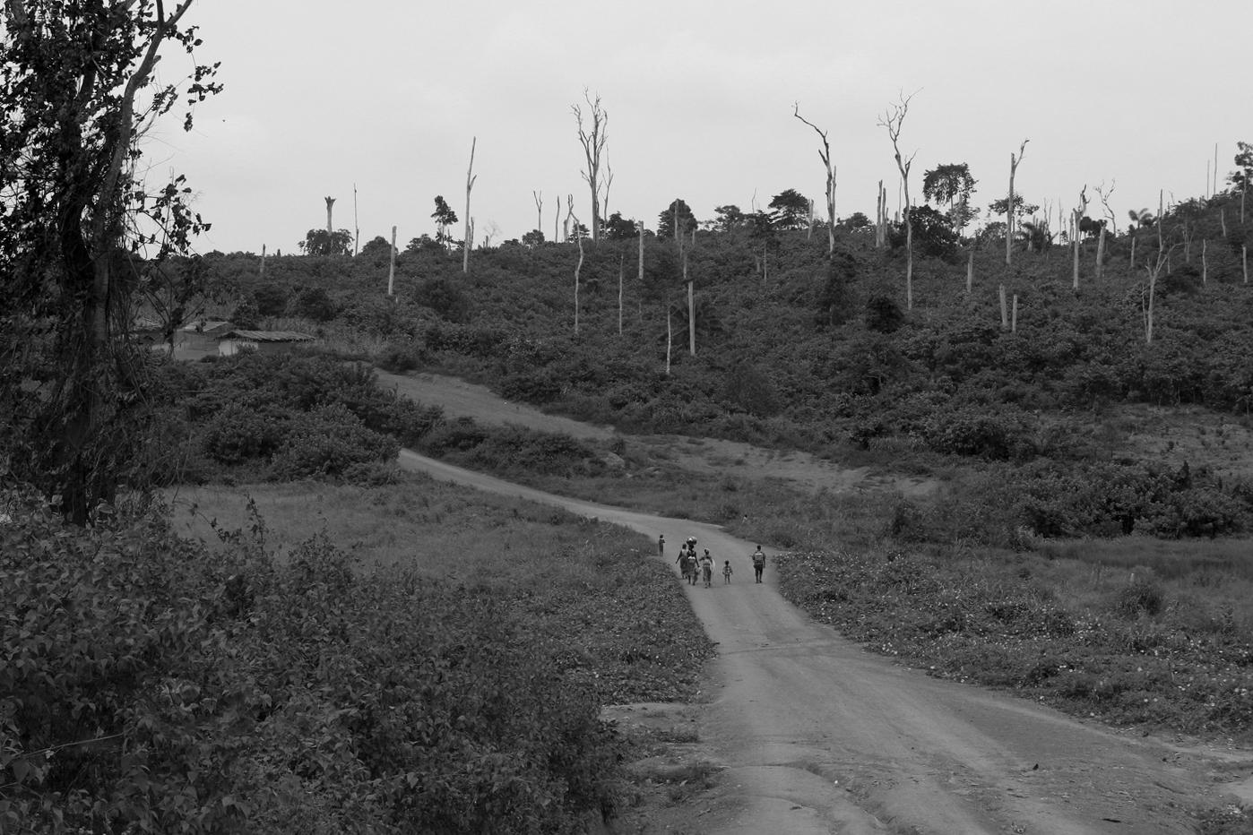 _Côte d'Ivoire_Kew_1447.CR2 copy-2.jpg