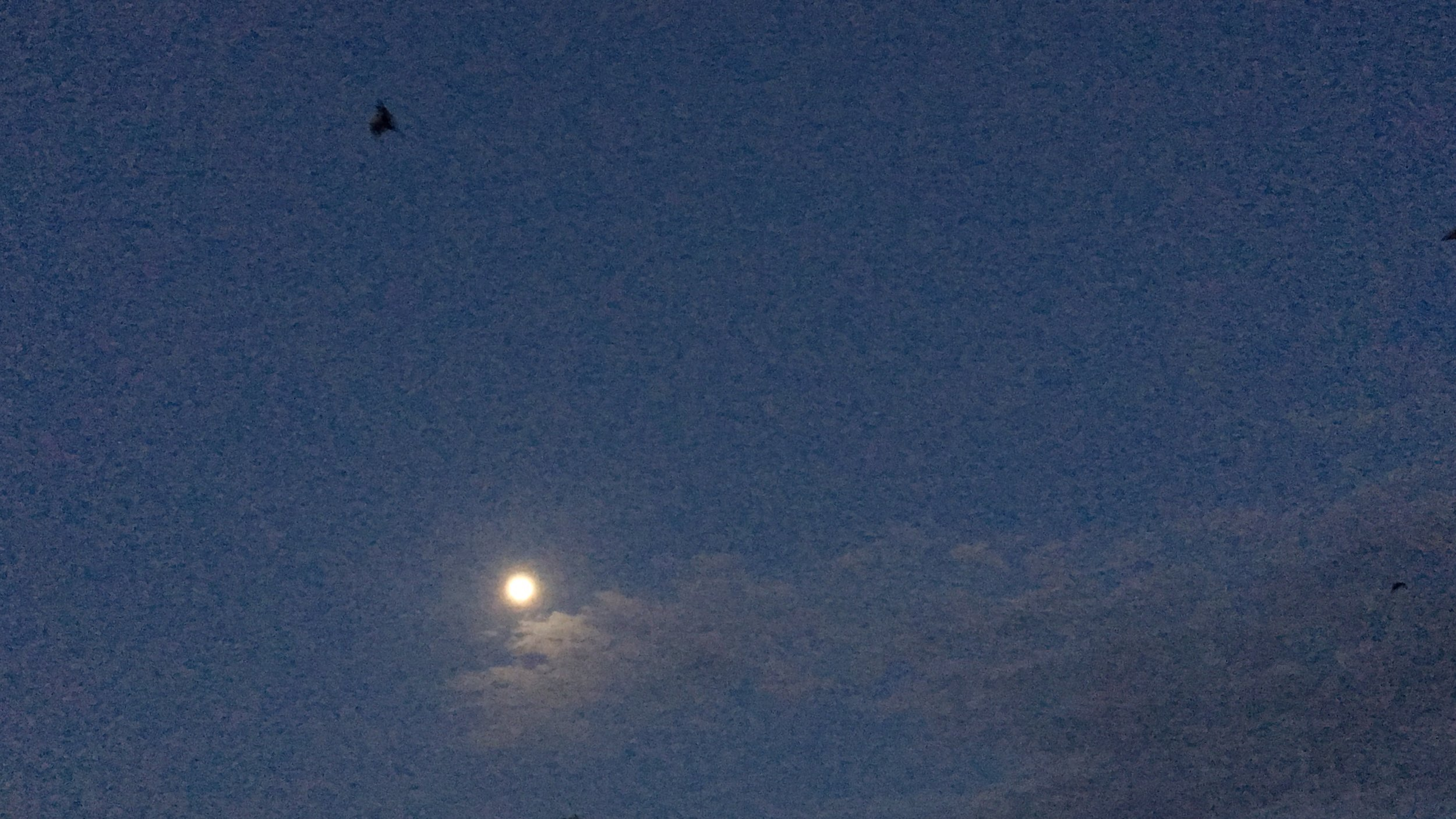 Batty full moon, Pemba. Photos: Kew.