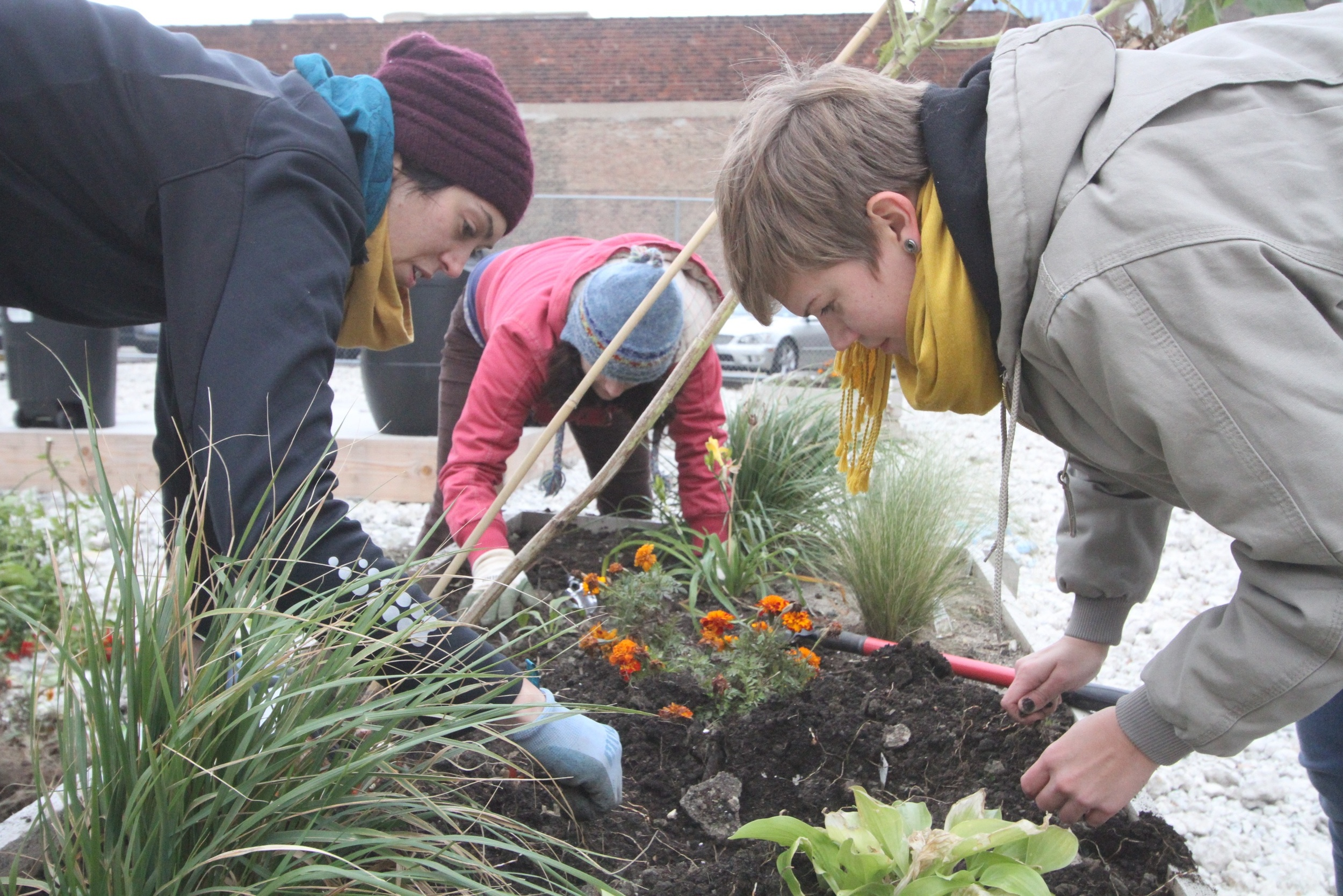 Students prepare the beds for the first winter in the Papermaker's Garden 1.0 in 2012. We had a successful first summer, and the garden was remodeled in early 2013.  Photo Credit: Chelsea Shilling