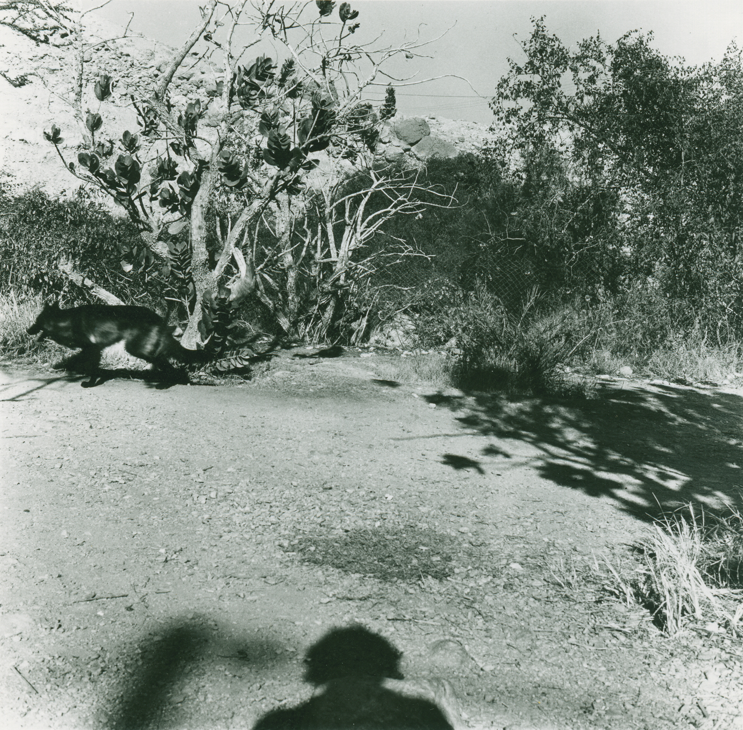 img007_Shadow with a dog_tight_lowres.jpg