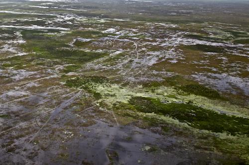 Flooding near Lake Okeechobee. Photo in honor of Gary Braasch ©Connie Bransilver
