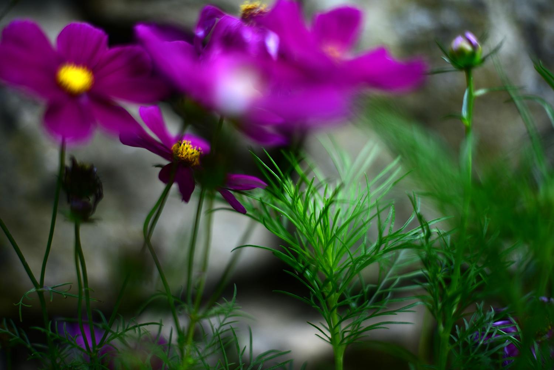 SJP_garden02a_2015-08-16-10.15.46.jpg