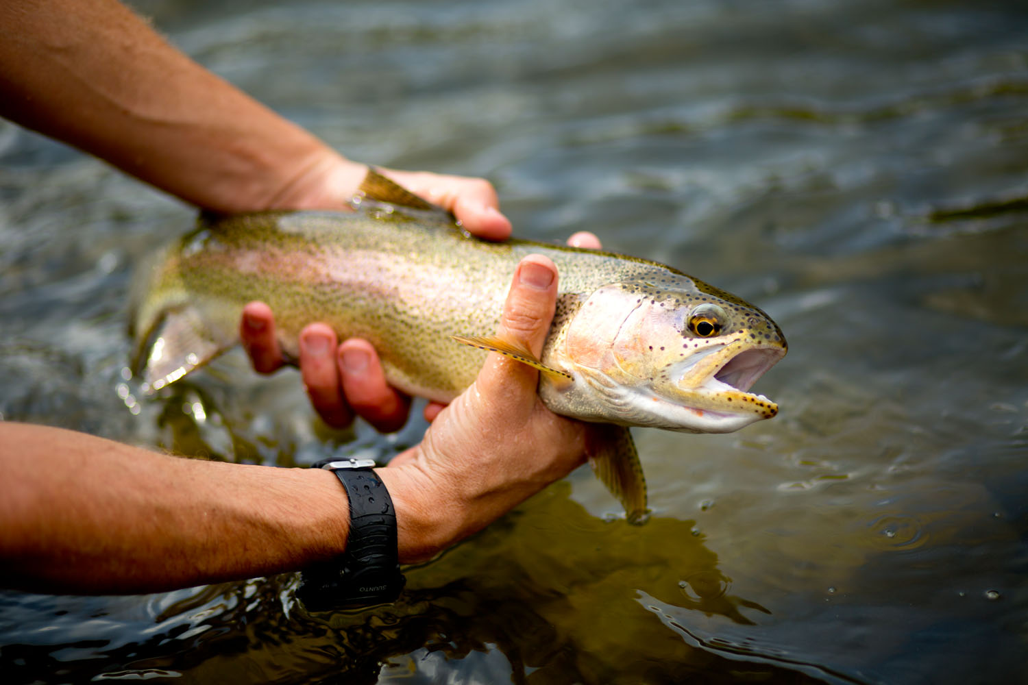 Lifestyle: Christopher Solomon releases a trout back to the White River, Colorado