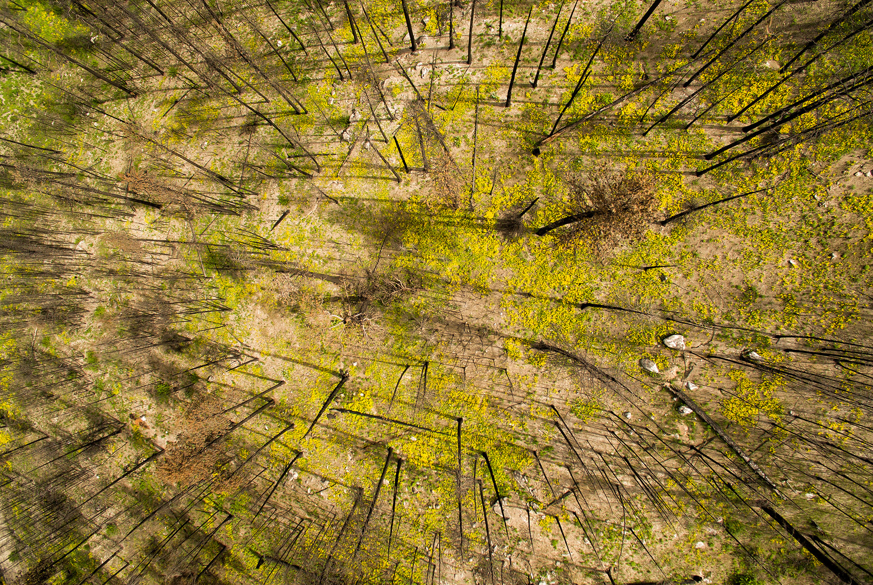 Conservation: Aeiral view of a burned forest in The Methow Valley as it recovers from two years of devestating record breaking wildfires, Washington