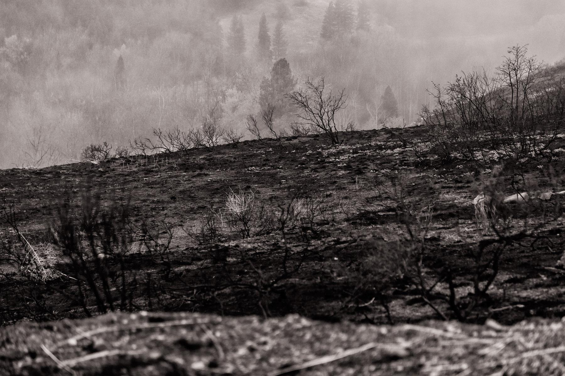 Conservation: A burned hillside after a wildfire near Twisp, Washington