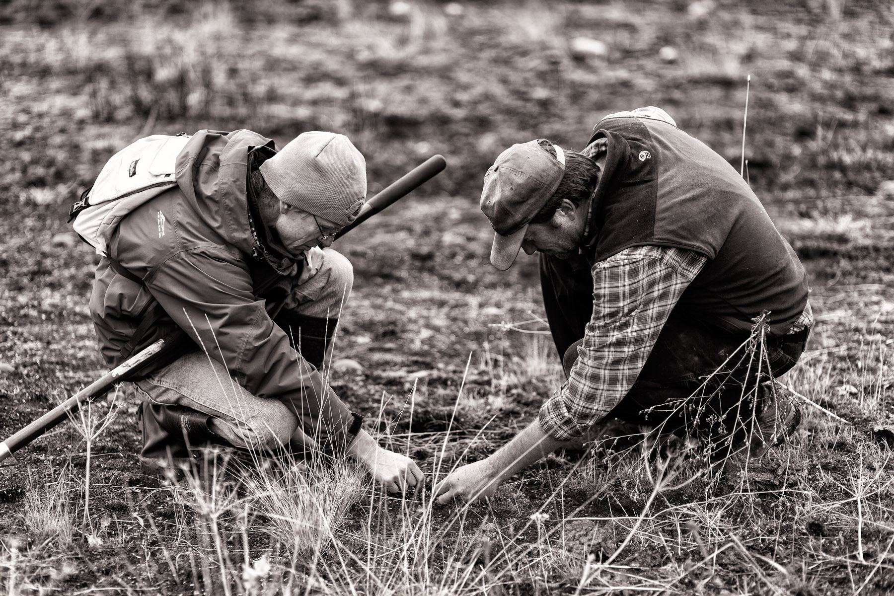 Conservation: A group of volunteers spreading seed after a wildfire in the Methow Valley, Washington
