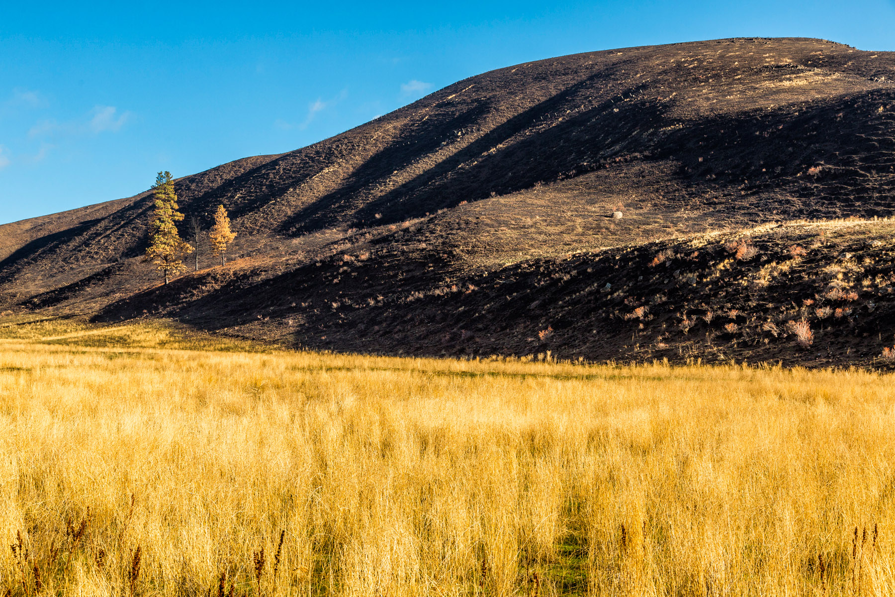 Conservation: The Methow Valley after a devestating wildfire, Washington