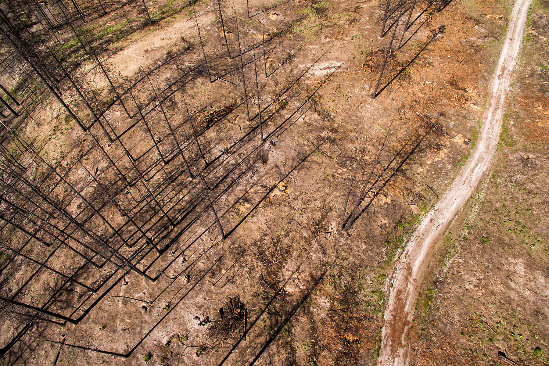 Conservation: Aeiral view of a burned forest near Loup Loup Pass as it recovers from two years of devestating record breaking wildfires, Washington