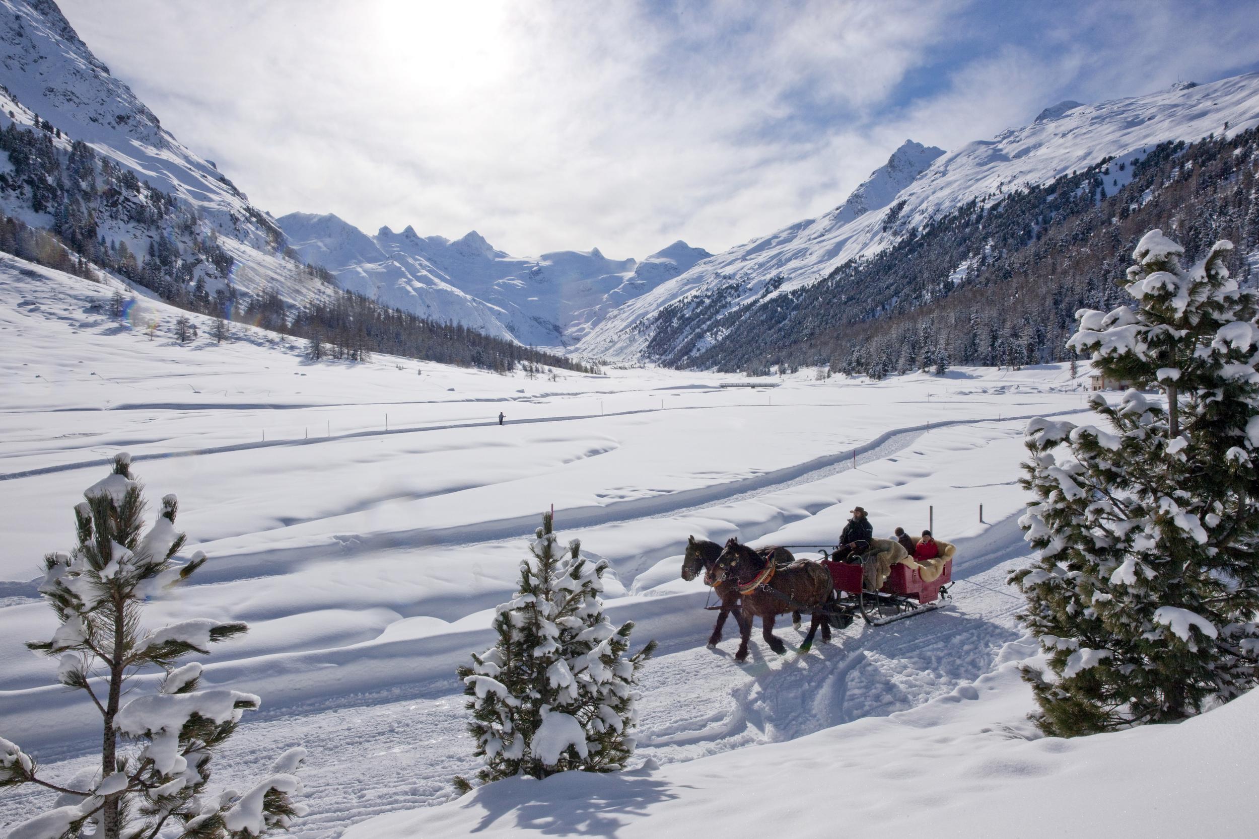 horse sledge, st. moritz