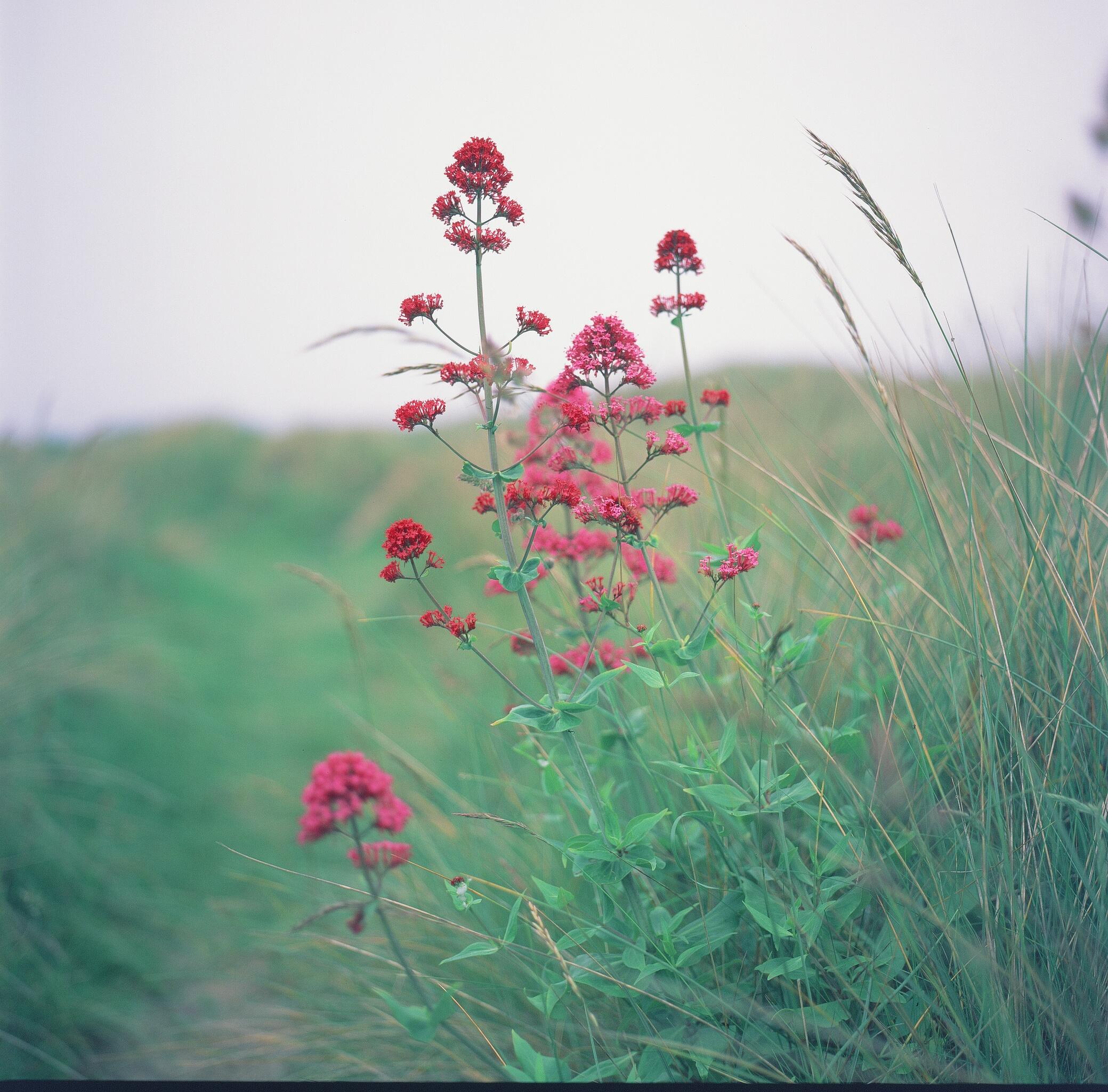Velvia 120 expired film shot.jpg