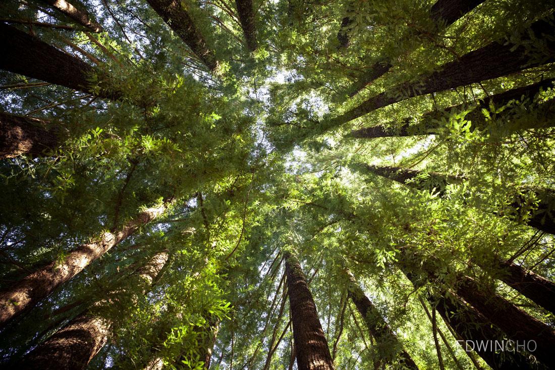 Tree Upskirt