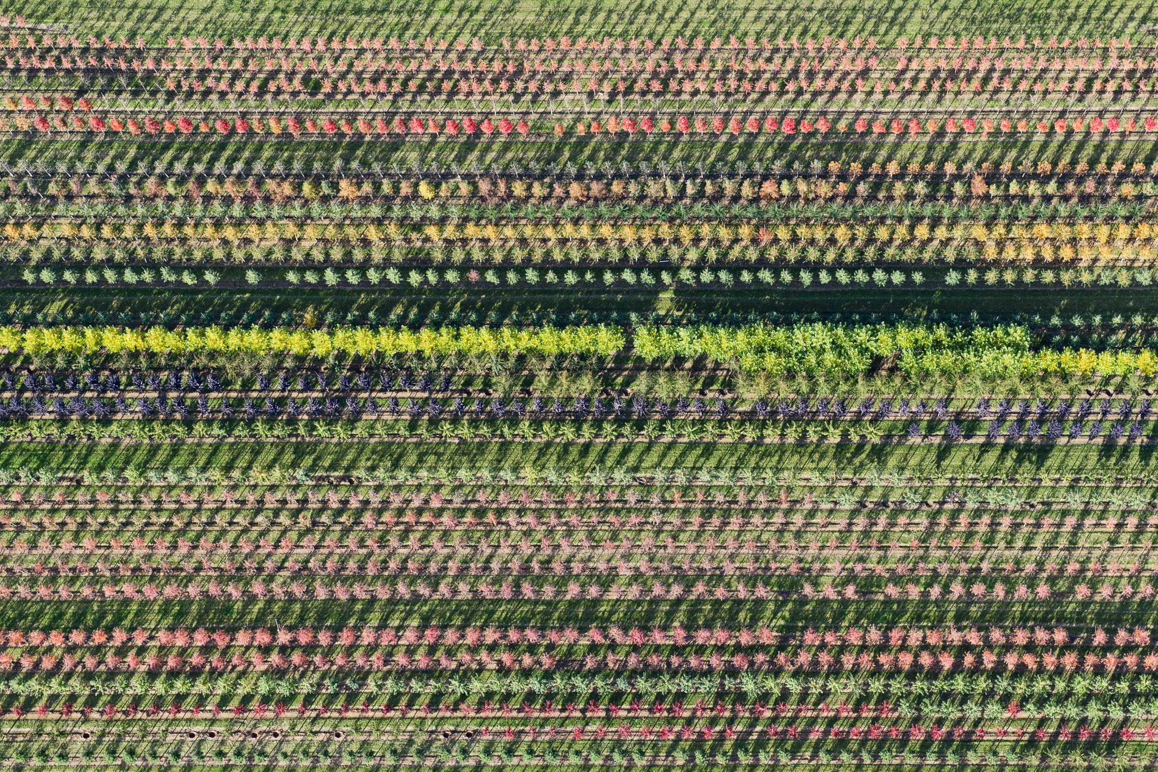 Carpet 2009.jpg