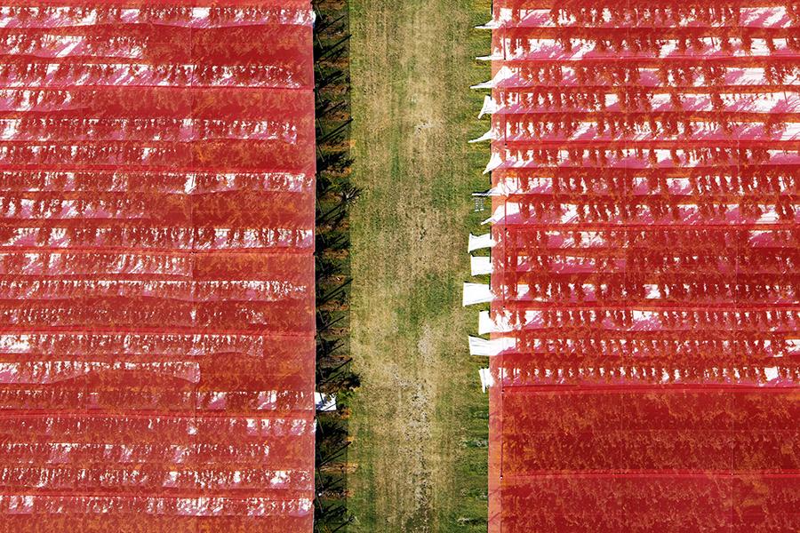 Red | 2015 | 100 x 150 cm | © ditone-Print auf Hahnemühle Papier im Schattenfugenrahmen