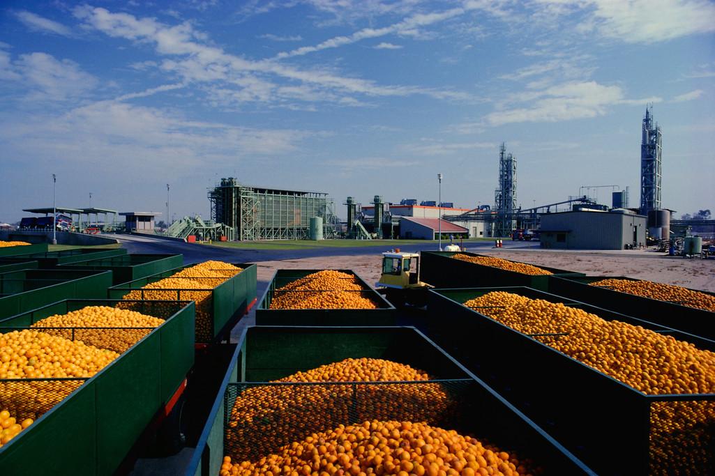 Citrus processing plant.jpg