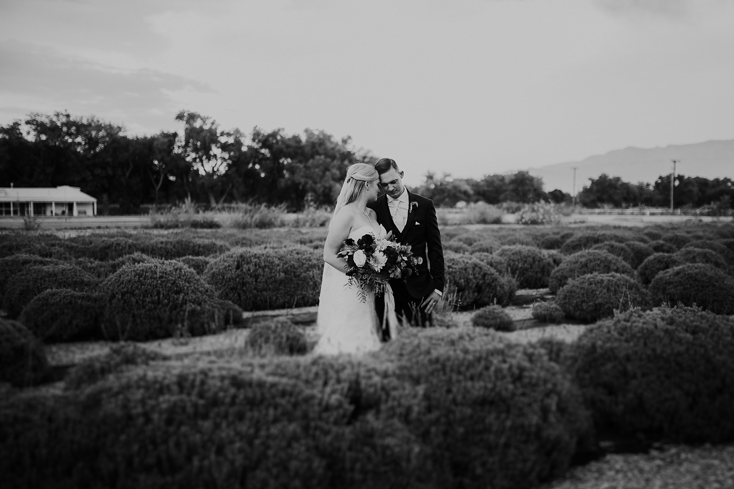 Alicia+lucia+photography+-+albuquerque+wedding+photographer+-+santa+fe+wedding+photography+-+new+mexico+wedding+photographer+-+los+poblanos+wedding+-+los+poblanos+fall+wedding_0071.jpg