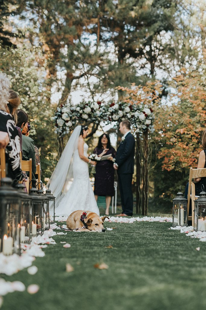 Alicia+lucia+photography+-+albuquerque+wedding+photographer+-+santa+fe+wedding+photography+-+new+mexico+wedding+photographer+-+albuquerque+wedding+-+santa+fe+wedding+-+dogs+in+weddings+-+wedding+dogs+-+real+weddings_0003.jpg