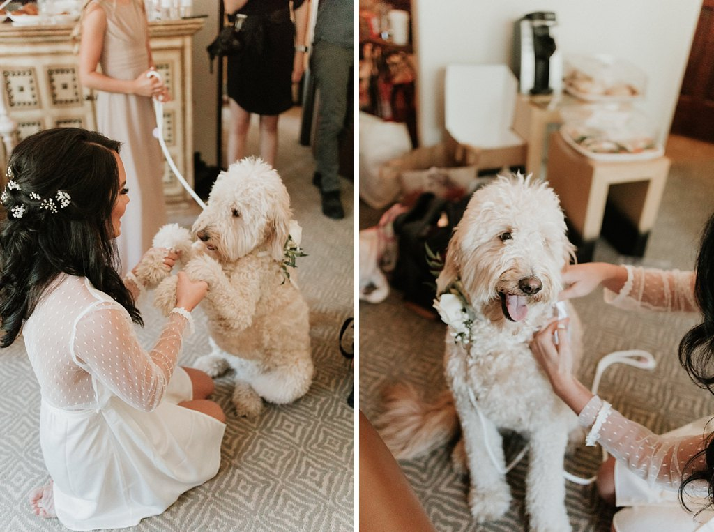 Alicia+lucia+photography+-+albuquerque+wedding+photographer+-+santa+fe+wedding+photography+-+new+mexico+wedding+photographer+-+albuquerque+wedding+-+santa+fe+wedding+-+dogs+in+weddings+-+wedding+dogs+-+real+weddings_0036.jpg