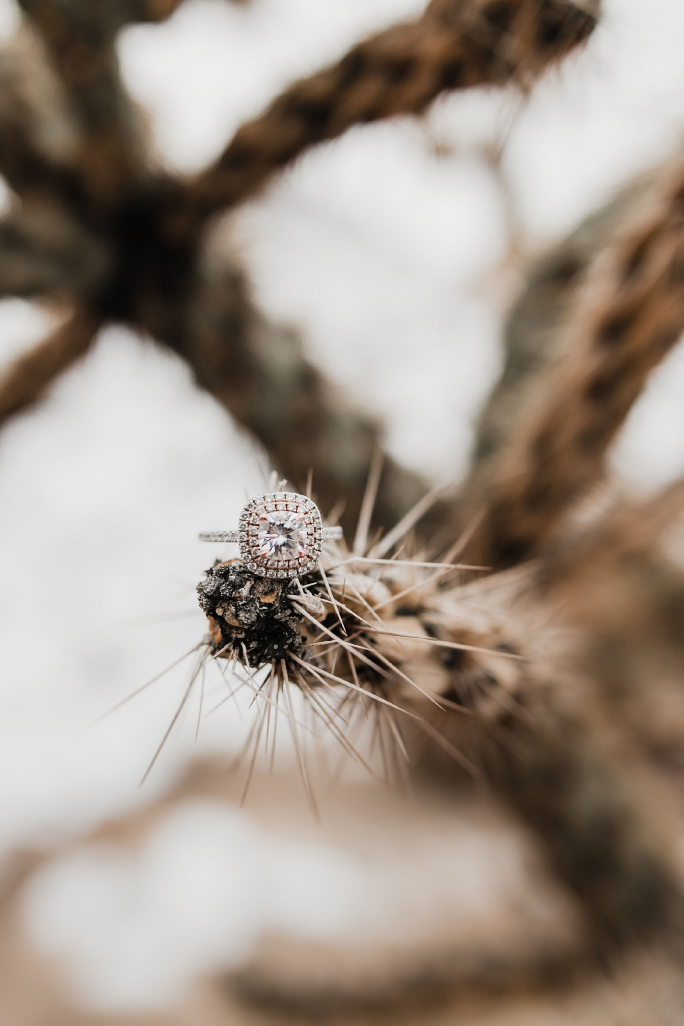 Alicia+lucia+photography+-+albuquerque+wedding+photographer+-+santa+fe+wedding+photography+-+new+mexico+wedding+photographer+-+new+mexico+wedding+-+engagement+-+albuquerque+engagement+-+winter+engagement+-+hyatt+tamaya+wedding_0022.jpg