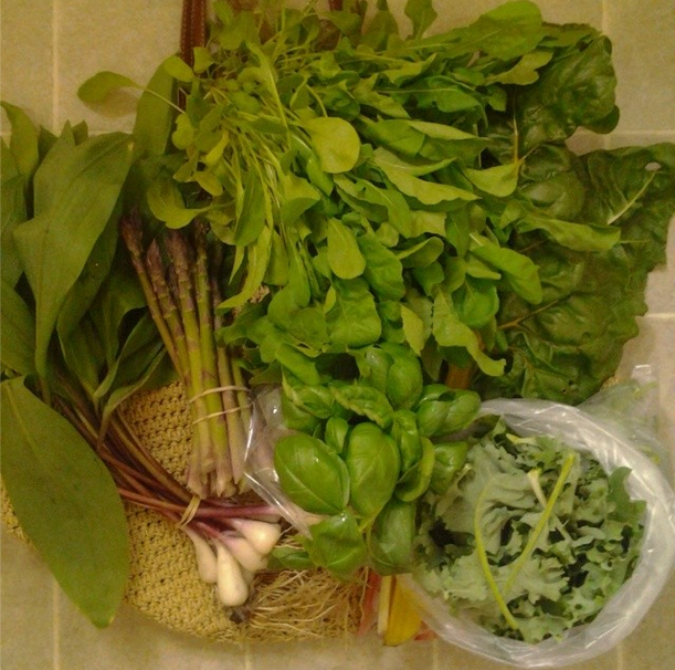 A mountain of greens from outdoor market number 4: arugula and basil, ramps, Swiss chard and baby kale, asparagus. Not pictures: 2 nasturtium. ($25)