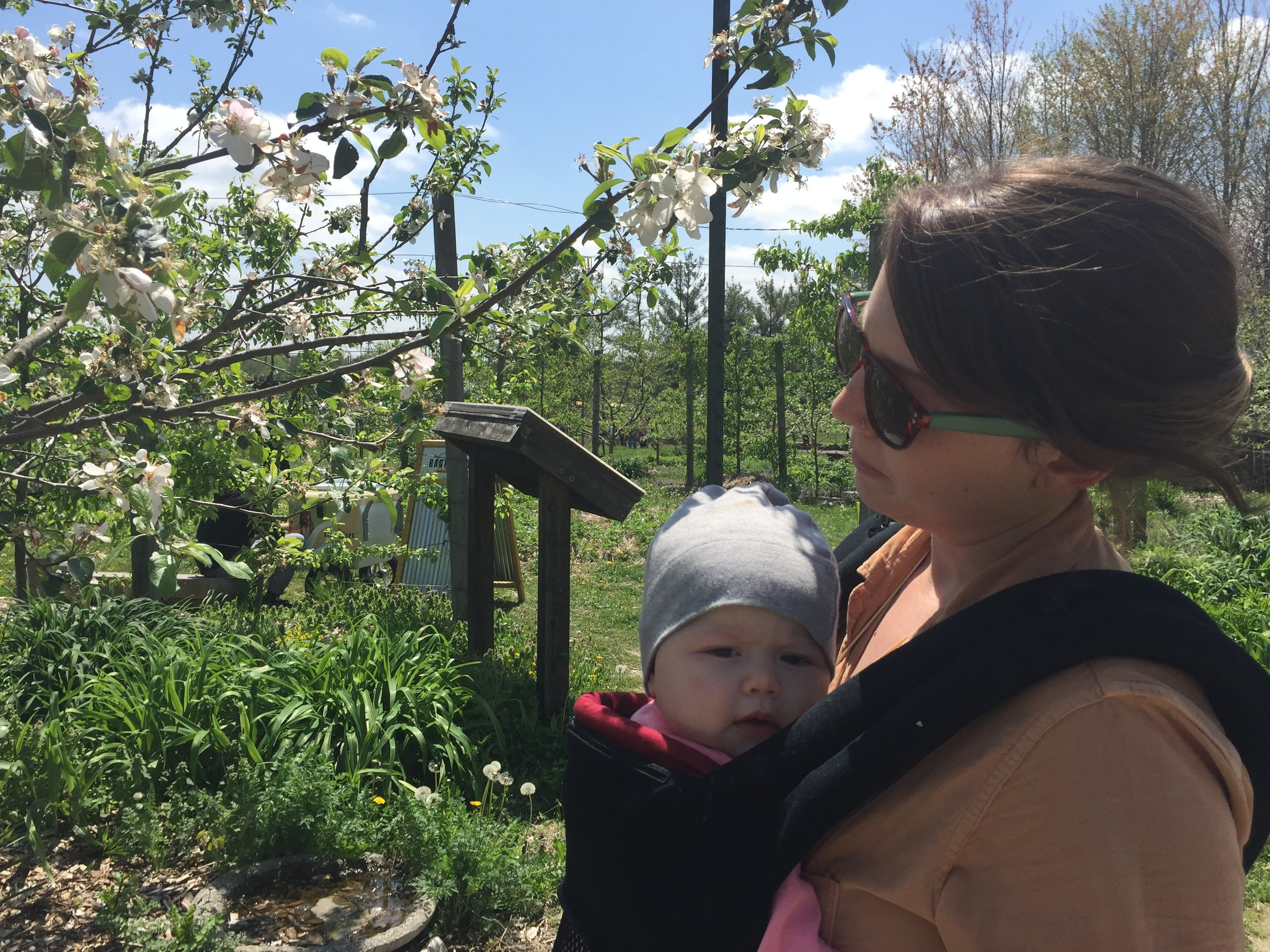 How my daughter first and most frequently navigated the Orchard.