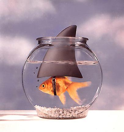 SHARKFISH - GARFIELD PHOTOGRAPHY