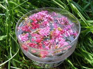 Most of the more delicate flowers for the remedies are prepared using the sun method. This involves floating the flower heads in pure water for three hours, in direct sunlight