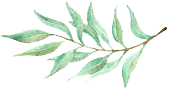olive branch copy.png
