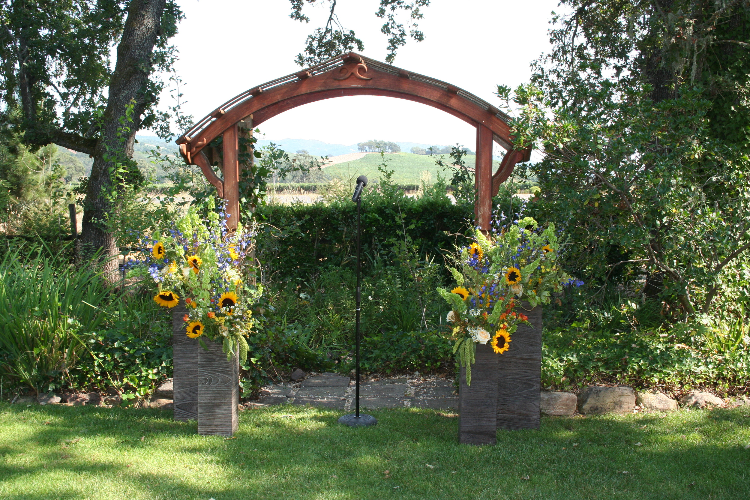 sunflowers waiting for the bride to appear