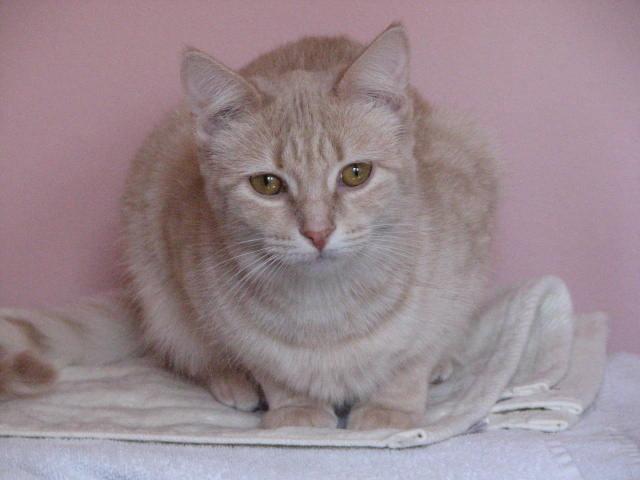 Cat Photo 2.JPG