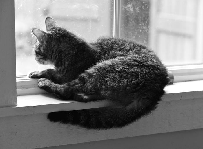 Cat Photo 1.jpg